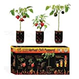 NSL Magic Plants Trio 3 Peppers Set