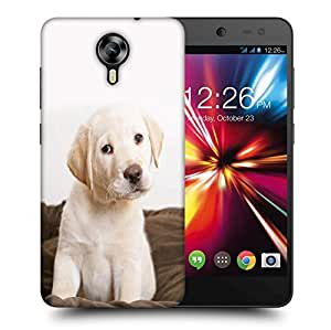 Snoogg Cute Puppy Eyes Wide Printed Protective Phone Back Case Cover For Micromax Canvas Nitro 4G