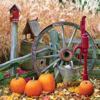 Goto Springbok Pumpkin Harvest 500 Piece Jigsaw Puzzle Details