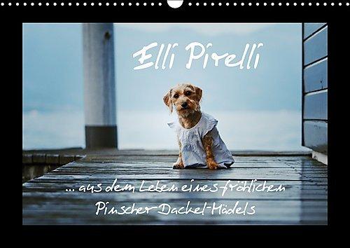 elli-pirelli-aus-dem-leben-eines-frohlichen-pinscher-dackel-madels-wandkalender-2017-din-a3-quer-aus