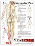 img - for Understanding Pain Anatomical Chart book / textbook / text book
