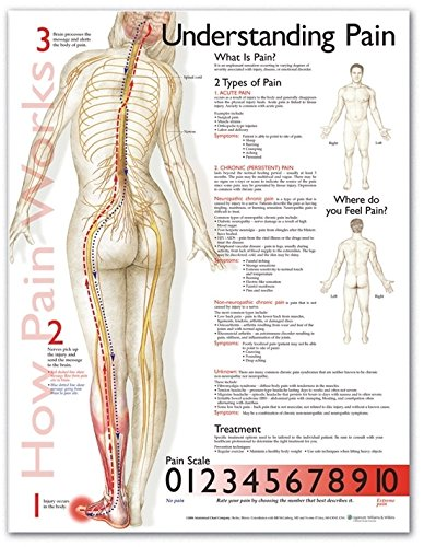 Understanding Pain Anatomical Chart (Location Chart compare prices)