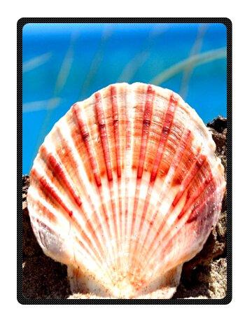 Seashell Throw Blanket front-1038009