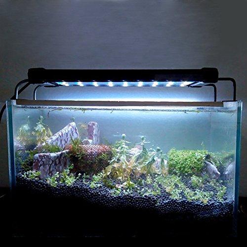 algen im aquarium bek mpfen der algenratgeber im internet. Black Bedroom Furniture Sets. Home Design Ideas
