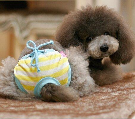 Artikelbild: Lesypet® Haustier Hund Hund Weiblich Hygienic Sanitär Pant Weiche Baumwollwindel für kleinen Hund