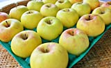 長野県産 生産農家直送りんご 「名月」 自家用ランク 20~40玉 約10kg入り/箱