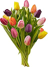 Benchmark Bouquets Multi-Colored Tulips, No Vase