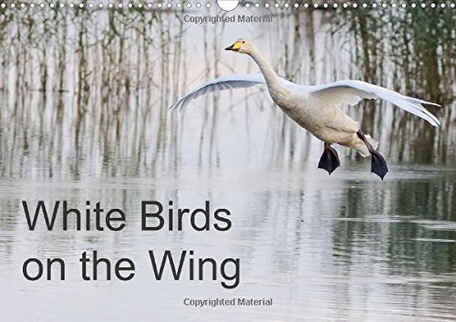 White Birds on the Wing (Wall Calendar 2016 DIN A3 Landscape): Beautiful photographs of white birds in flight. (Monthly calendar, 14 pages) (Calvendo Nature)