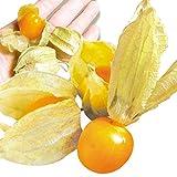 国華園 長野産 食用ほおずき オレンジチェリー 200g