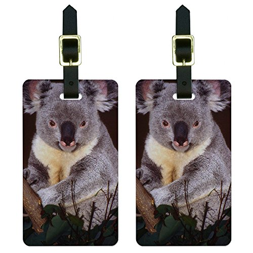 Koala Bear Luggage Tags Suitcase Carry-On ID Set of 2 letrend rolling luggage spinner suitcase wheels trolley women travel bag 20 inch student carry on password hardside trunk men