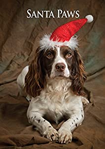Working Springer Spaniel Dog Christmas Card. Large A5 Seasonal Greeting Card with Scarlet Envelope. Perfect for Dog Lovers