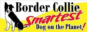 Border Collie Smartest Dog on the Planet a Border Collie Bumper Sticker