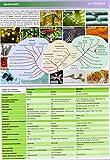 Image de Lerntafel: Mikrobiologie im Überblick (Lerntafeln Biologie)