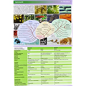 Lerntafel: Mikrobiologie im Überblick (Lerntafeln Biologie)