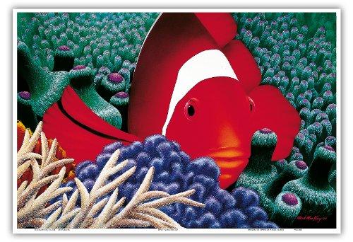 Diva - Hawaïen Poisson Clown De Tomate Dans L'anémone De Mer - Original Color Painting by Mark Mackay - Reproduction Professionelle d'art Master Art Print - 33cm in x 48cm
