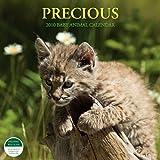 Precious Baby Animal 2010 Calendar