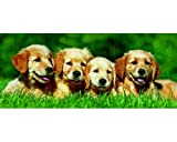 Golden Puppies 200 Piece Panoramic Puzzle