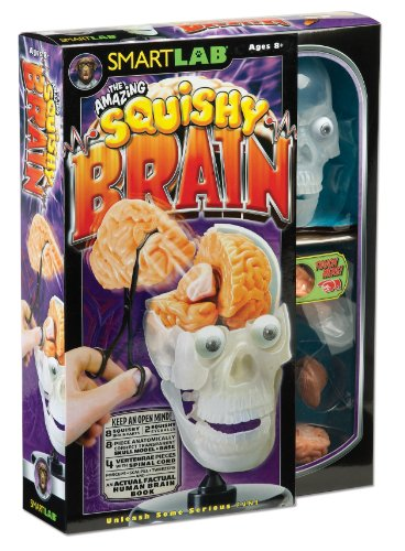 519fa%2B8uxuL Cheap Price SmartLab Toys The Amazing Squishy Brain