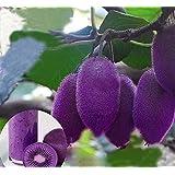 Free Ship 40 Seeds New Varieties Purple Heart Kiwi Seeds Kiwi Fruit Tree Bonsai Seeds For Home & Garden