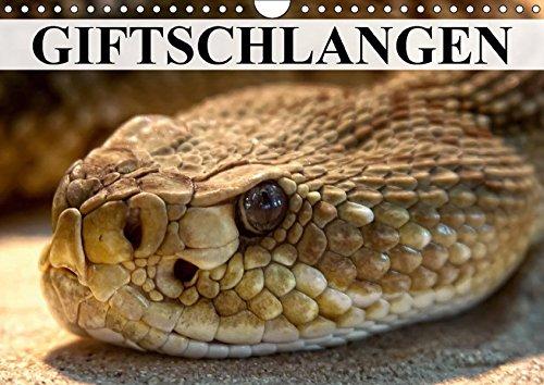 giftschlangen-wandkalender-2017-din-a4-quer-die-familie-der-vipern-ottern-und-giftnattern-monatskale