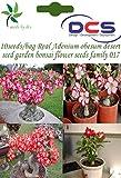 (017) 10seeds/bag Real Adenium obesum desert rose seed garden bonsai flower seeds
