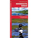 Minnesota Birds: A Folding Pocket Guide to Familiar Species (Pocket Naturalist Guide Series)