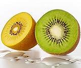 Fruit Seeds Combo - Kiwi, Golden Kiwi by National Gardens