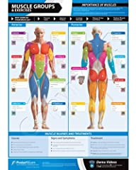 Muscle Groups & Exercises Gym Poster…