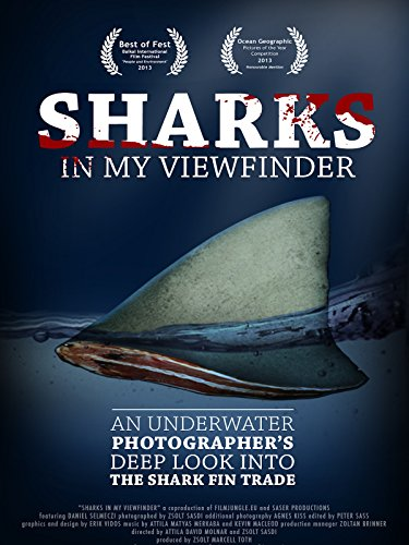 Sharks in my viewfinder