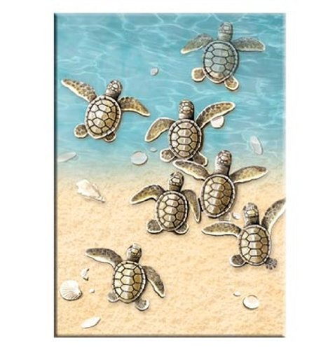 Tree-Free Greetings Baby Turtles Premium Magnet, 2.5 x 3.5 Inches, Multicolored (73088)