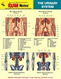 Urinary System Anatomy EXAM Notes (EXAM Notes Reference Charts)