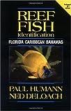 Reef-Fish-Identification-Florida-Caribbean-Bahamas