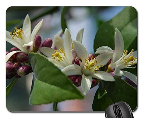 myerlemon-blossom-mouse-pad-tappetino-per-mouse-motivo-flowers-mouse-pad