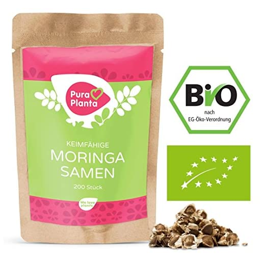 Moringa-Samen-Bio-von-Pura-Planta-200-keimfhige-Moringa-Samen-vom-Wunderbaum-Moringa-oleifera-Inkl-Anzuchtanleitung-fr-deinen-Moringabaum-100-Bio-Moringa-Samen-keimfhig
