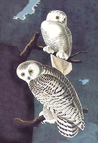 Buyenlarge 0-587-03549-8-G1827 'Snowy Owl' Giclee Fine Art Print, 18