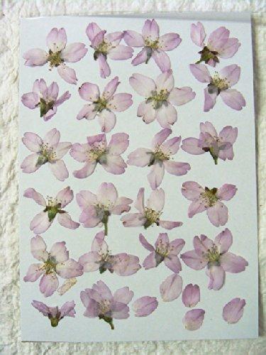 【S-96】押し花素材(押し花パック)桜(サクラ・さくら)20枚【飛騨の山野草押し花素材】