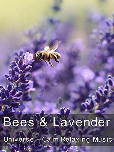 Bees & Lavender