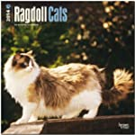 Ragdoll Cats 2014 Square 12x12