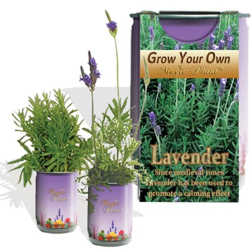 Lavender Planter - Just Open...water...watch It Grow All-included-growing Kit
