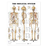 img - for The Skeletal System Anatomical Chart book / textbook / text book