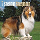 Shetland Sheepdogs Calendar (Multilingual Edition)