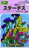カネコ種苗 草花タネ748 スターチス シヌアータ 混合 10袋セット