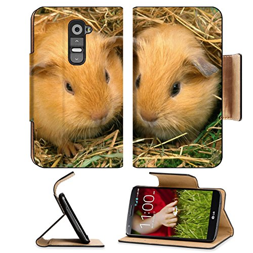Best Guinea Pig Bedding 3720 front