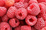 Raspberry Fruit Seeds by National Gardens