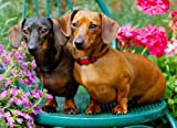 Just Dachshunds Jigsaw Puzzle