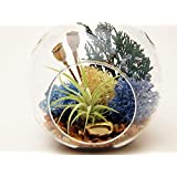 """Air Plant Terrarium with Gold Nuggets, Juniper Sprigs and Moss 4"""" Round Globe / Juniper Forest"""