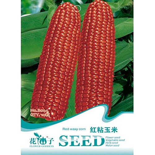 Red Waxy Corn Seeds Novelty Vegetable Seed 10pcs (Bag Of Corn Seed compare prices)