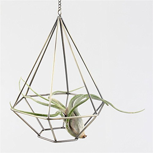 Rustic Hanging Diamond Tear Drop Shape Drop Rustic Style Freestanding Hanging Metal Tillandsia Air Plant Rack Holder Bronze 6.3inches width x 6.3inches width x 7.87inches height (Freestanding Plant Hanger compare prices)