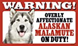 Warning Overly Affectionate Alaskan Malamute On Duty