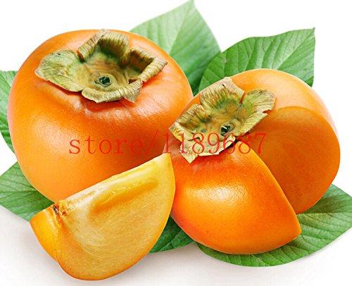 100-pezzi-cachi-2015-nuovo-seme-piante-succulente-cachi-semi-alberi-da-frutto-semi-per-piantare-giar